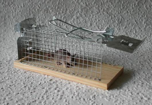 на какой клей ловить мышей